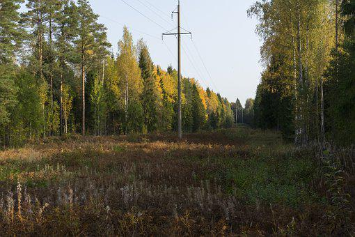 Power Lines, Trees, Forest, Glade, Clearing, Field