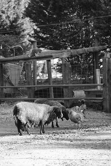 Farm, Animals, Farm Animal, Horse, Cow