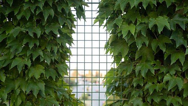 Plant, Leaf, Background, Marcowei