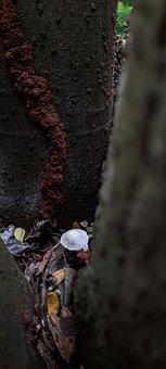 Mushroom, Fungi, Fungus, Rain Forest, Forest, Nature