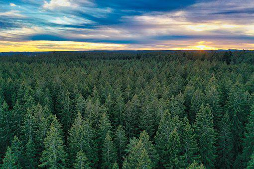 Trees, Forest, Sunset, Horizon, Conifer, Sunrise, Dawn