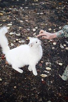 White Cat, Hand, Pet, Owner, Furry Cat, Kitty, Feline