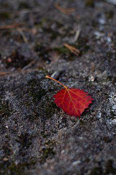 Leaf, Foliage, Plants, Rock, Autumn, Fall Colors
