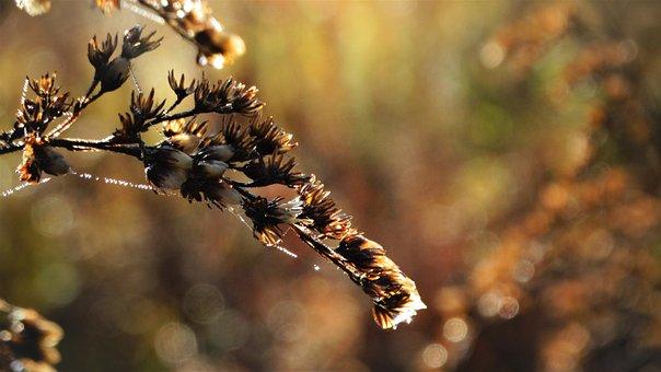 Flowers, Branch, Wet, Plant, Meadow, Nature, Closeup