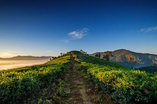 Tea Leaves, Path, Mountains, Hills, Sky, Clouds