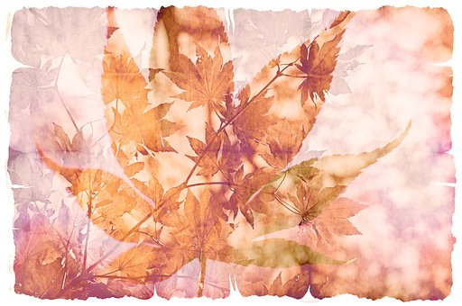 Leaf, Maple, Parchment, Pattern, Stationery, Paper