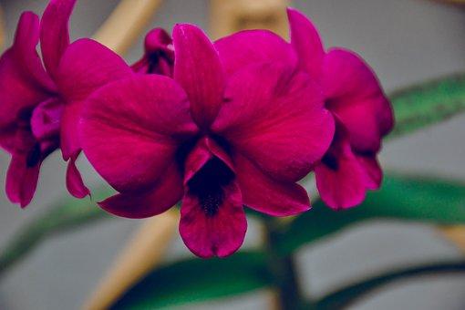 Flower, Rose, Plant, Nature, Garden