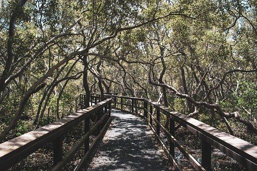 Trees, Plants, Bridge, Pathway, Crossing