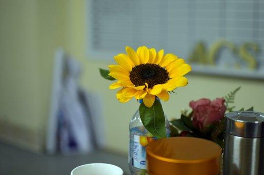 Sunflower, Flower, Petals, Leaves, Decorative