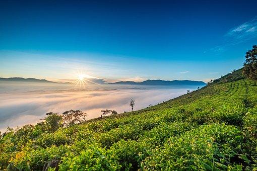 Sun, Clouds, Tea Leaves, Tea Farm, Farming, Plantation