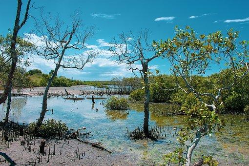 Trees, Plants, Bushes, Lake, Pond