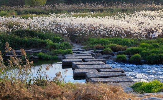 Autumn, Silvergrass, Creek, Stone Steps, Reeds, Reedy