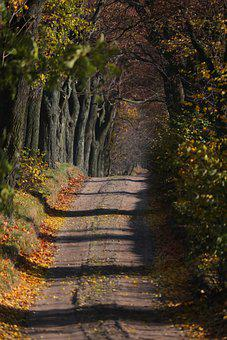 Road, Avenue, Pathway, Trail, Trees, Leaves, Foliage