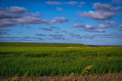 Coast, Field, Meadow, Grass, Pasture, Port, East Frisia