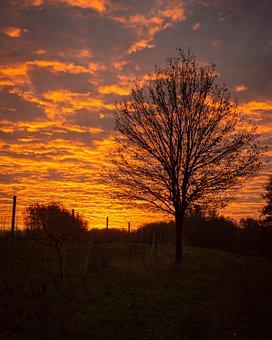 Sunrise, Tree, Early Morning, Orange, Autumn, Sun