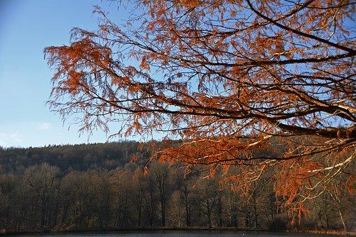 Park, Lake, Autumn, Nature, Landscape, Water, Trees