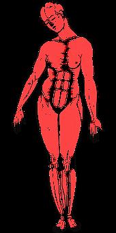 Woman, Body, Anatomy, Female, Biology, Line Art, Girl