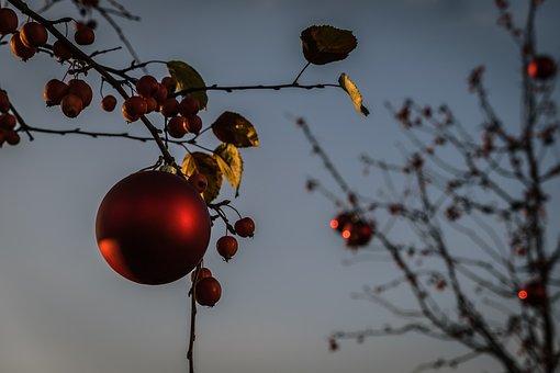 Tree, Christmas Ornaments, Decorations, Christmas Time