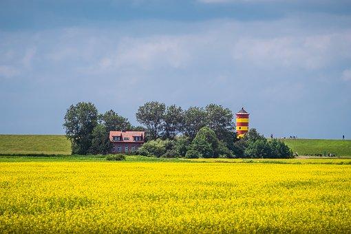 Pilsum Lighthouse, Field, Flowers, Yellow Flowers