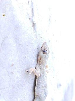 Surface, Lizard, Close Look