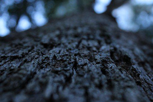 Bark, Texture, Tree, Trunk, Wood, Forest, Nature