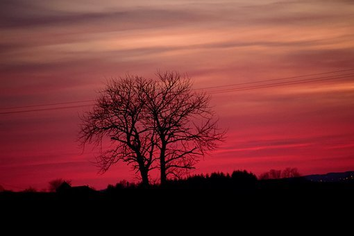 Sunset, Trees, Silhouettes, Bare, Bare Trees
