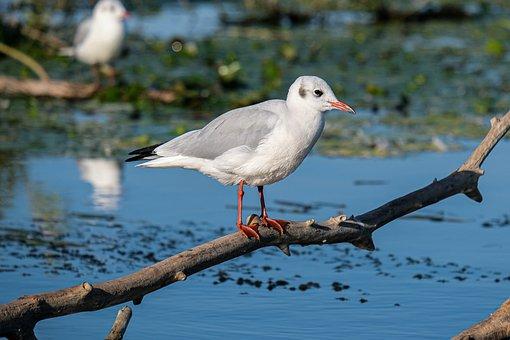 Bird, Gull, Branch, Lake, Reflection, Squacco Heron