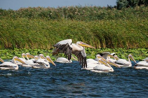 Birdwatching, Danube Delta, Romania, Birds, Danube