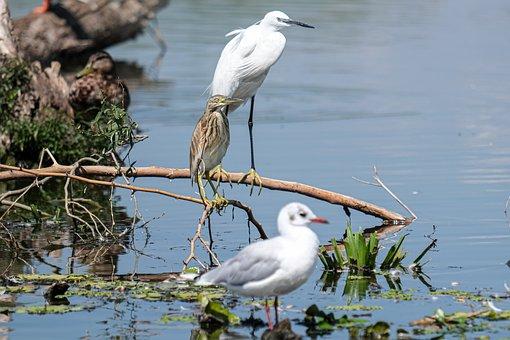 Birds, Branch, Lake, Reflection, Danube Delta