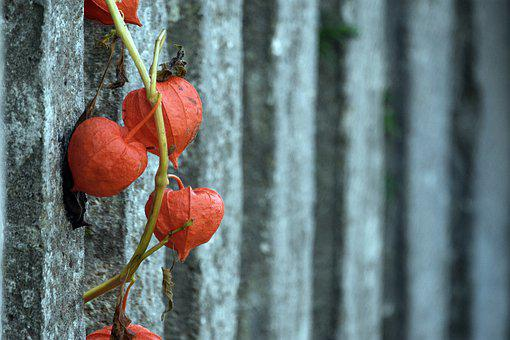 Tomato, Fence, Fencing, Sapling, Brach, Plant