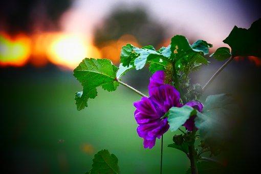 Purple, Flower, Flowers, Vegetable, Garden, Blossom