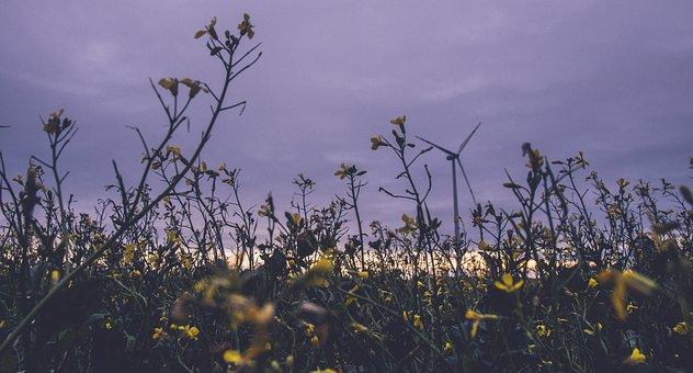 Flowers, Meadow, Field, Plants, Flora, Wind, Ecology
