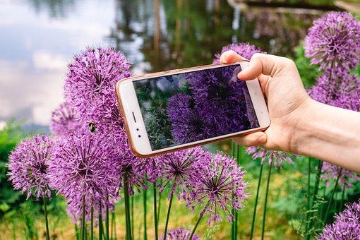 Allium, Flowers, Mobile Phone, Phone Camera