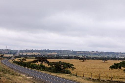 Wheat, Landscape, Farm, Nature, Agriculture, Field