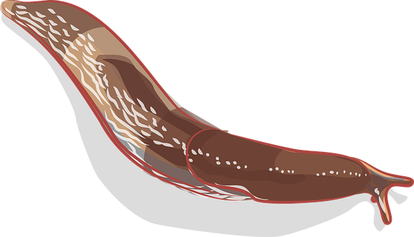 Slug, Mollusc, Animal, Invertebrate, Gastropod, Cut Out