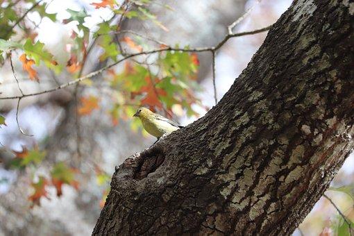Bird, Animal, Tree, Perched, Trunk, Bark, Wildlife