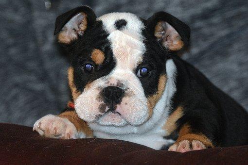 Dog, Doggy, Puppy, Decrease, Coat, Spout, Eyes, Ears