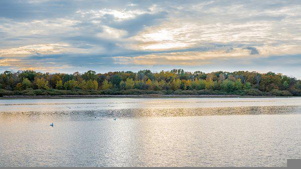 Lake, Trees, Autumn, Water, Birds, Woods, Fall, Bank