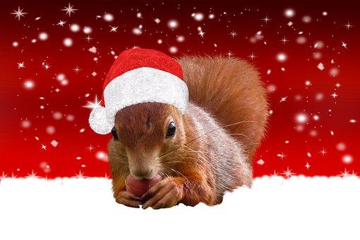 Squirrel, Chipmunk, Rodent, Santa Hat, Snow, Christmas