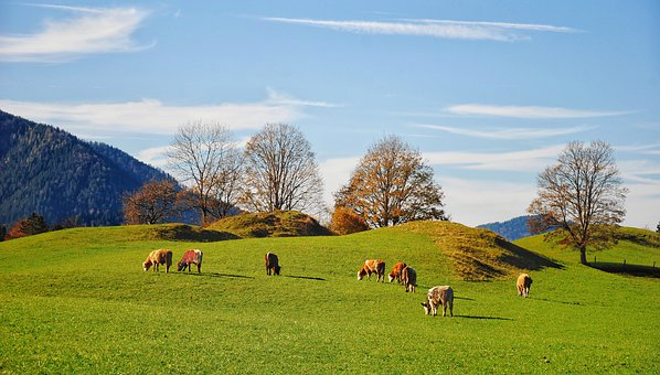 Mountains, Cows, Cattle, Trees, Clouds, Scenic, Alpine