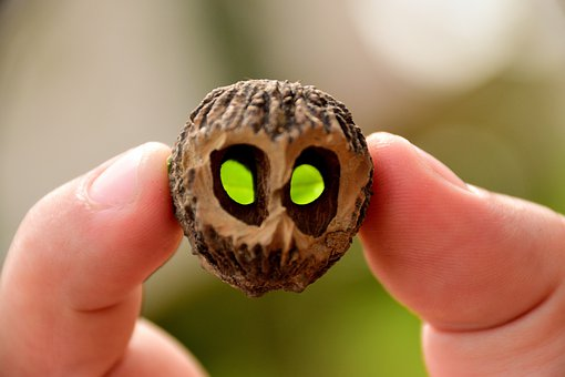Unusual, Extraterrestrial, Nuts, Shell Eyes, Surreal