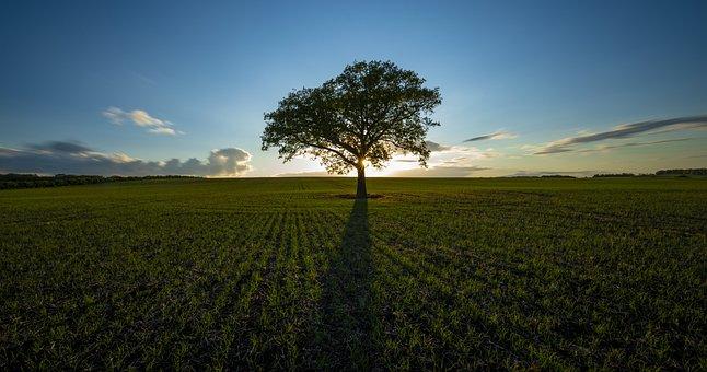 Tree, Field, Sunrise, Sunset, Sunlight, Dawn, Dusk