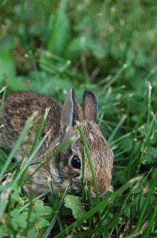 Bunny, Rabbit, Cute, Adorable, Easter, Animal, Little
