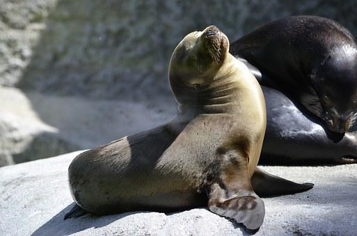Robbe, Seal Baby, Zoo, Nature, Animal, Water, Sun