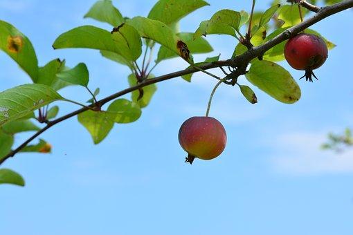 Flower Apples, Apple Baby, Fruit, Mini Apple, Blue Leaf