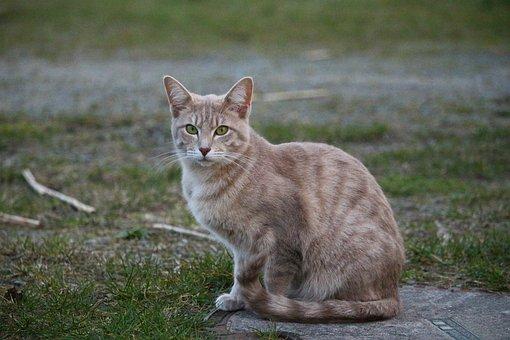 Cat, Kitten, Mackerel, Breed Cat, Cat Baby, Young Cat
