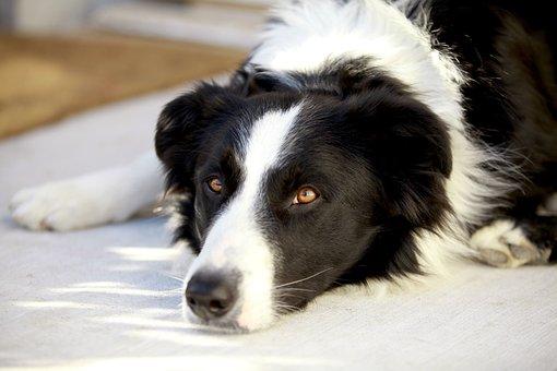Dog, Look, Pet, Animal, Animals, Mammals, Puppy, Friend