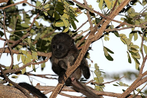 Monkey, Baby Animal, Nature, Wildlife, Animal, Brown
