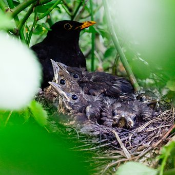 Nestling, Bird, Nest, Nature, Baby, Young, Tree