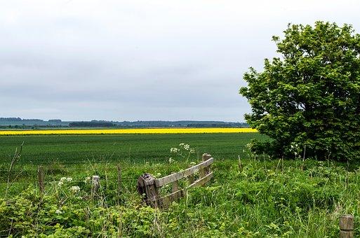 Field, Cloudiness, Oilseed Rape, Clouds, Landscape